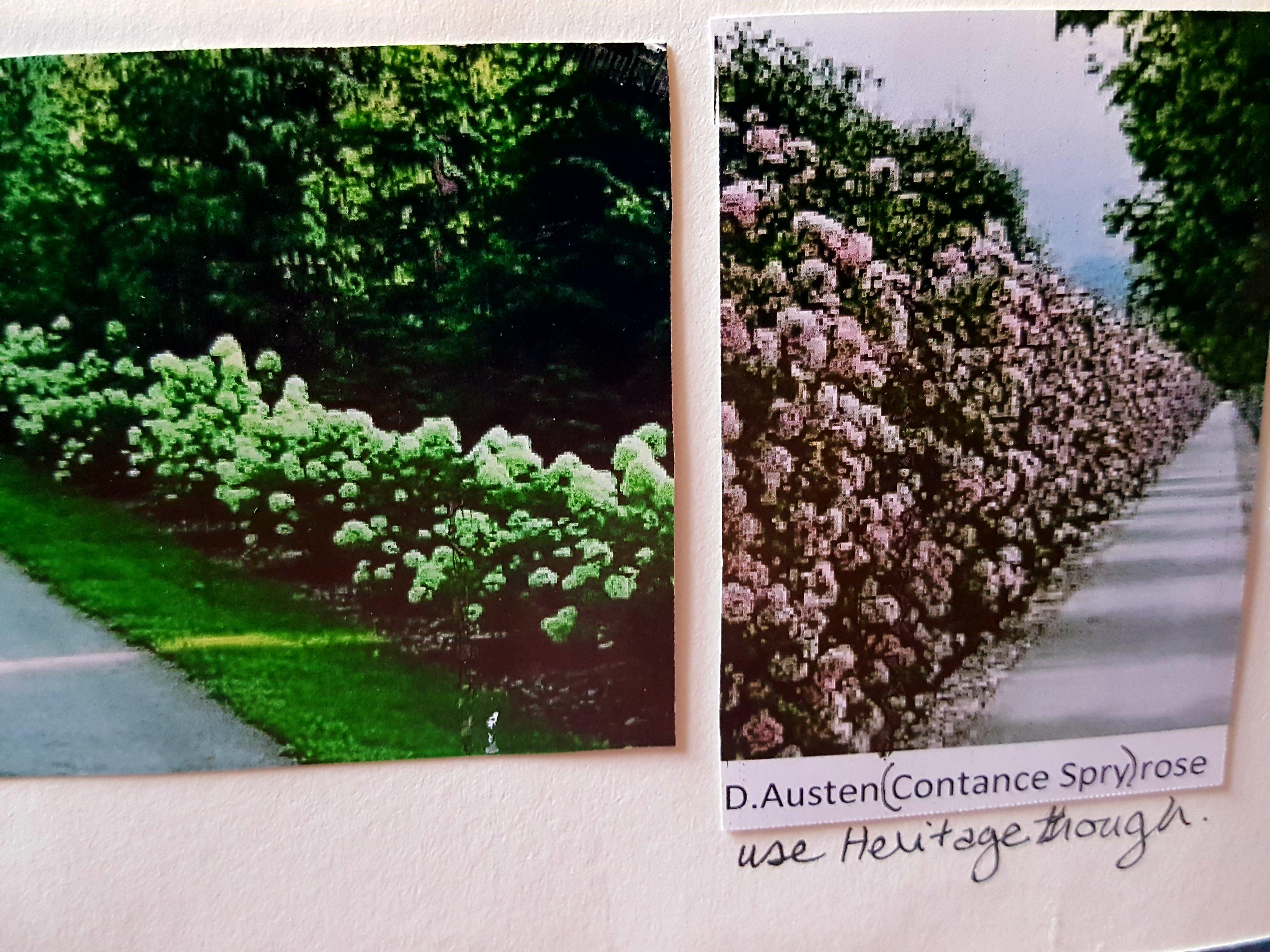 Floral Hedges